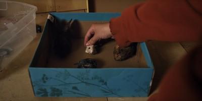 怪癖祖母死後…孫女開始剪下小動物的頭顱 一場喪禮揭開家族詛咒