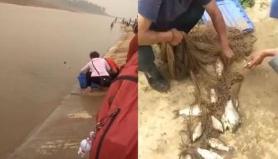 外地人放生鯽魚 村民用桶狂撈