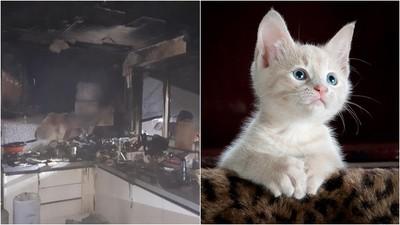 家中無人莫名起火 嫌犯一狗兩貓...竟是牠打開了電磁爐