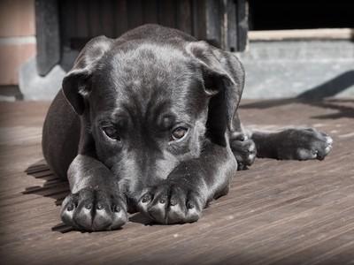 人類對汪星人「十大誤解」!狗狗才沒那麼喜歡被你抱呢TДT