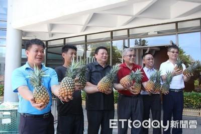 助果農 東縣府同仁認購6公噸鳳梨