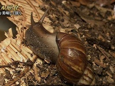 摸蝸牛可能會死!「廣東住血線蟲」爬進腦,精神錯亂高燒而亡