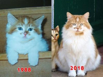 民國77年出生的貓還活著!少女飼主「鏟屎30年」變大嬸:牠不曾生病