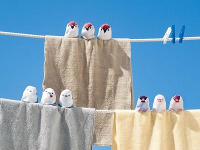 文鳥排排站陪你洗臉!「鳥球毛巾」圓到萌出鼻血