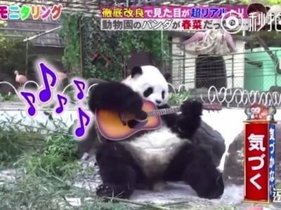 扮熊貓多久會被發現?拿黏毛器撸自己都有人信 只好拿吉他開始彈