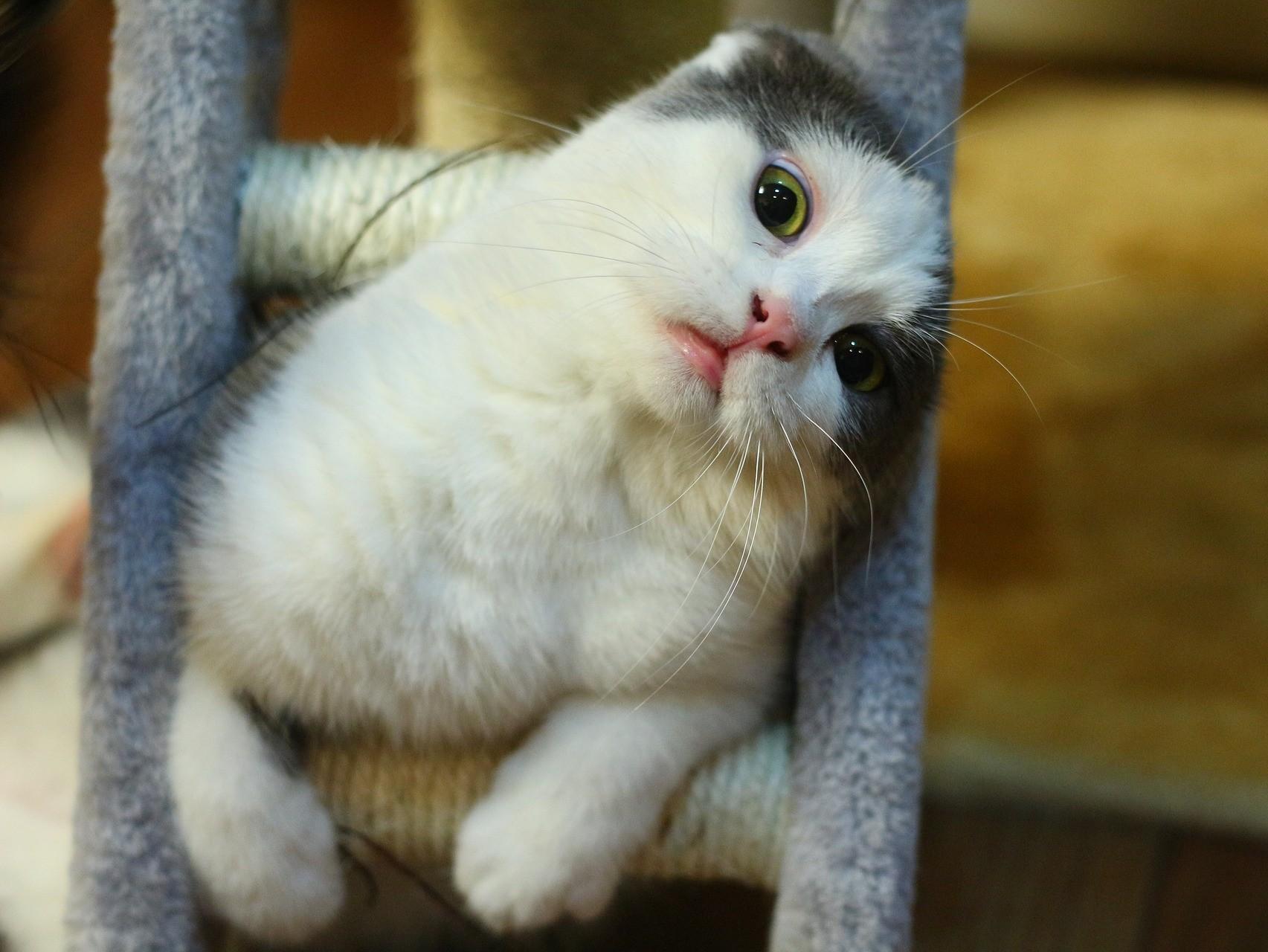 ▲▼貓咪示意圖。(圖/翻攝自免費圖庫pixabay)