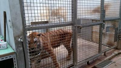 竹市動物園搬遷遭爆害死21隻動物