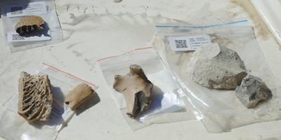 14世紀毛利遺址 挖出恐鳥骨頭