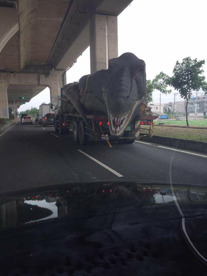 高架橋下遇到暴龍!  駕駛崩潰:不敢超車「怕被咬」