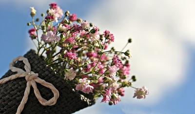 挑自己喜歡的花!10種隱藏個性全洩露 百合=母愛爆棚!