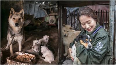 每年吃掉百萬隻狗!夏季三伏天變南韓「狗難日」 人道組織手刀救犬