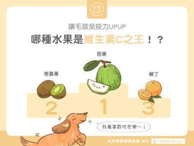 毛孩「必吃水果TOP3」! 芭樂太優秀直接打趴零食啦