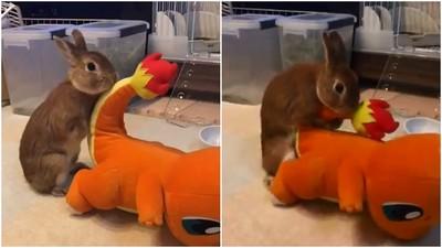 日本贏球太興奮!兔子緊抓小火龍「高速抽動」...太害羞主人看呆