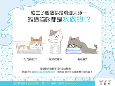 貓都是水做的? 喵喵「筋骨軟Q」真相是它...太驚人啦!