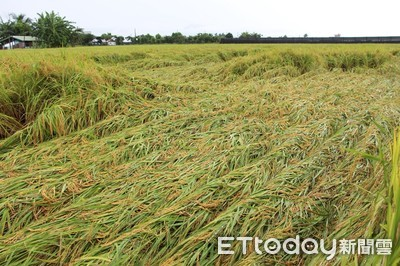 豪雨農損達3393萬!高雄最嚴重