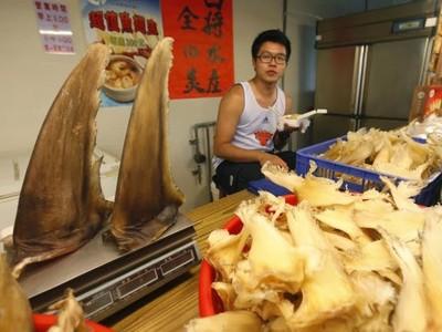83種鯊魚絕種!中國1年嗑掉1.2萬噸魚翅…3成是歐盟賣過去的