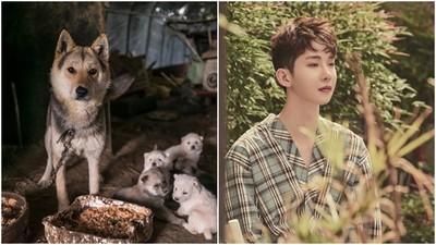 狗=家畜=可吃?百萬條狗被燉「補身湯」 12萬南韓人連署修法禁食