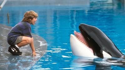 馴服我又拋棄我..海洋館虎鯨24年後回歸大海 卻因思念人類而死