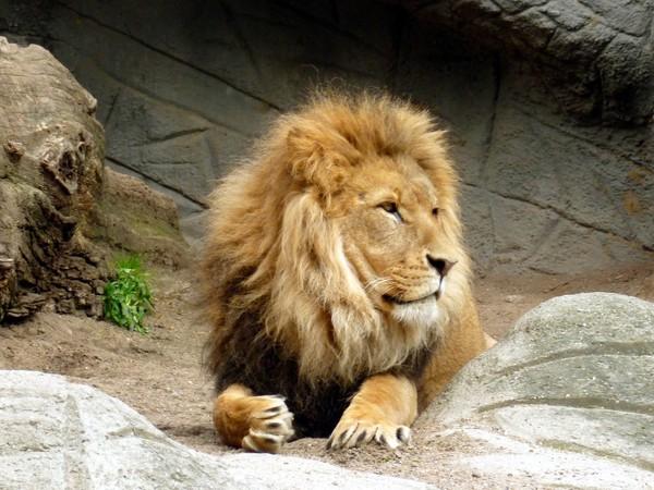 從「喜歡的動物」看個性&別人眼中的你! 愛獅子=重視家庭