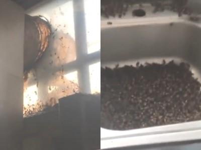 「十萬蜂軍」破門尋仇!陸夫妻嚇壞:昨夜打死廚房一隻小蜜蜂