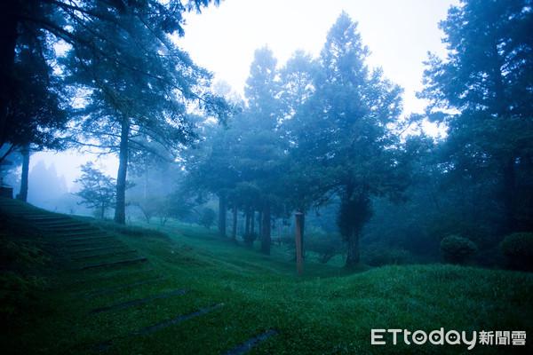 ▲▼阿里山,森林,國家風景區,森林遊樂區(圖/記者徐文彬攝)