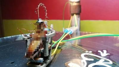 小強抽搐15秒被電成乾屍!菲網紅自製「迷你電椅」挨批虐待動物