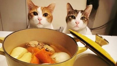 和貓皇吃同一鍋飯! 奴才必學「人貓共用食譜」不用分兩次煮啦