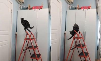 腳滑險慘摔! 聖上抓梯子往上爬