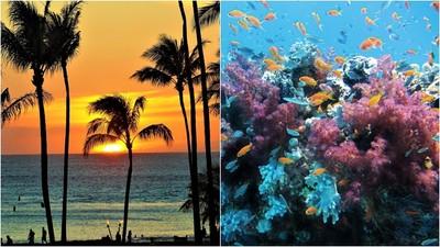 全球首例!夏威夷2021年禁擦防曬乳 挽救逐漸消失的珊瑚礁