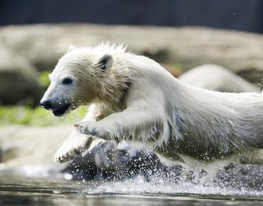 北極熊爬核潛艇覓食 120船員嚇壞