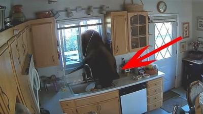 2公尺棕熊闖平房「偷吃糖果」 屋主見怪不怪趕跑:牠特愛M&M