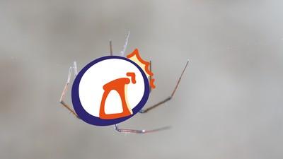 「蜘蛛感應」關鍵在電場!靠腿上細毛感測 看準時機吐絲飛行