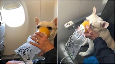 法鬥飛機上缺氧舌頭發紫 機警空服員拿出氧氣罩神救援