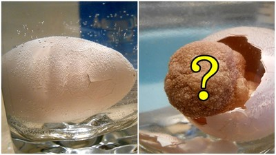 嚇死人!把「泡水玩具蛋」浸水中,23小時後生出詭異怪物