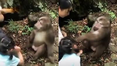 餵獼猴反被揍! 毛手臂轟中女童面部 網冷汗:關動物園也有野性