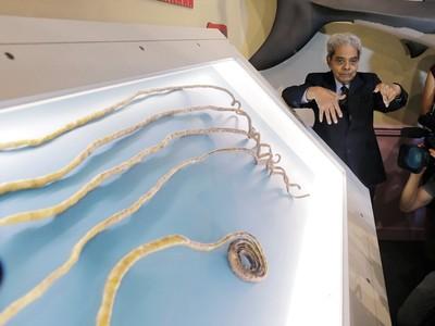 留了66年!「金氏紀錄最長指甲」放進博物館...電動砂輪才磨得斷