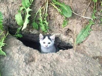 洞口探出浪浪幼貓!不捨放下一碗飼料...隔天驚見「貓咪加倍」