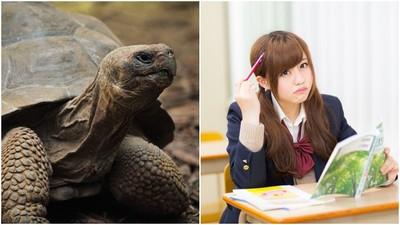 教科書挖坑?解釋課本古詩「烏龜伸頭」 南韓國文老師挨告性騷