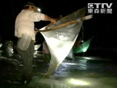 為了賺1萬元 夜捕日本禿頭鯊苗