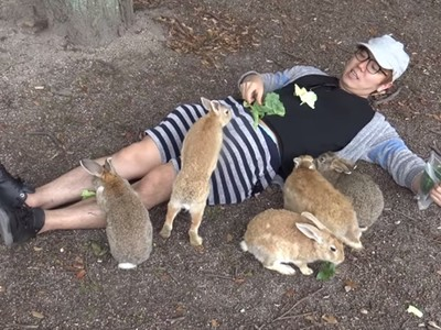 暴雨沖毀「兔兔島」!官網PO文求勇者上山幫餵食:正在捱餓中
