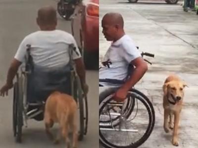 沿路跟緊緊!忠犬汪「頭頂輪椅」幫推,不捨身障主人手痠