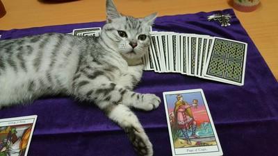 產後對愛貓過敏…塔羅師不得已寄養 牠卻以為被拋棄變兇貓
