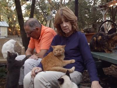 霸氣帶走收容所全部老貓 夫妻成立「貓養老院」..陪牠們走最後一程