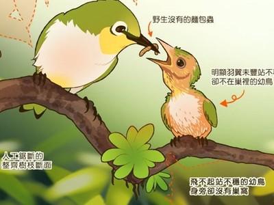 可恥攝影師把鳥當網美「擺拍」!插畫家拆穿鳥類攝影破綻