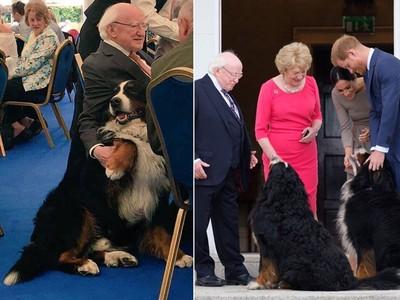 還以為隔壁阿公 愛爾蘭總統太親民爆紅 帶兩隻巨犬騙走所有人的心