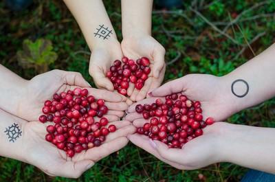 吃蔓越莓「好處&禁忌」專家解答