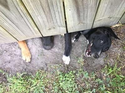 「傻笑狗」融化冰山男!他13年不曾和鄰居交談,直到隔壁搬來1女3狗