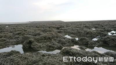 小朋友擔心接收站破壞魚蝦的家 中油:藻礁會完整保留