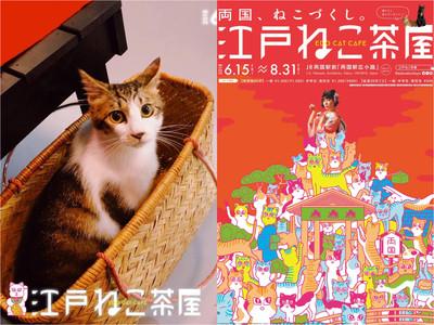 貓奴打卡地標「江戸貓咪茶屋」