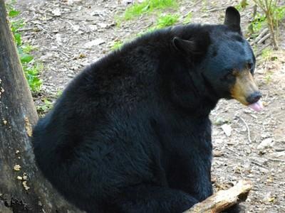 3歲童失蹤55小時稱:有熊陪我玩